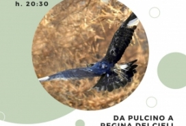 2021/07/09 DA PULCINO A REGINA DEI CIELI